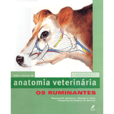 Anatomia-Veterinaria